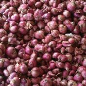 Shallot Red Sun - 400 grams